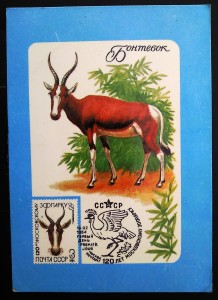 Bontebok